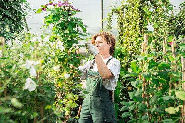 Pflanzen bernhard baumschulen seit 1870 for Pflanzen lieferservice