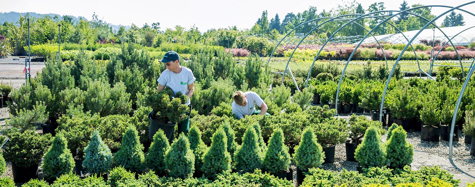 Sortiment bernhard baumschulen seit 1870 for Pflanzen lieferservice